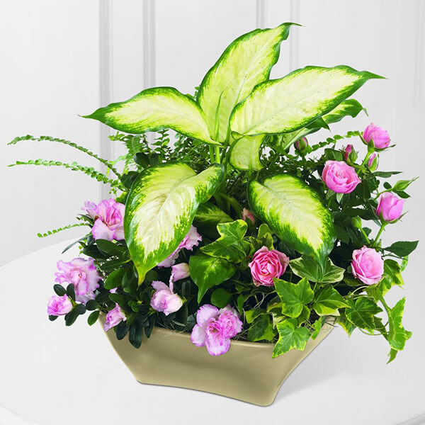 The FTD Garden of Grace Planter