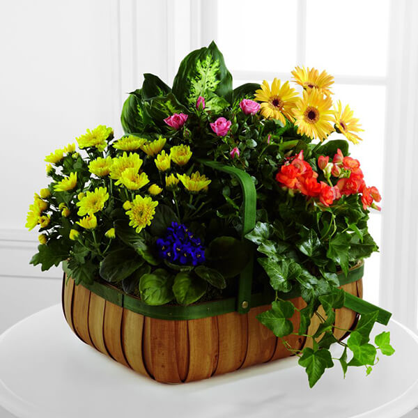 The FTD Gentle Blossoms Basket